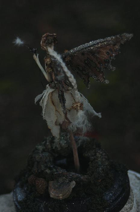 Sparrowtwilight4